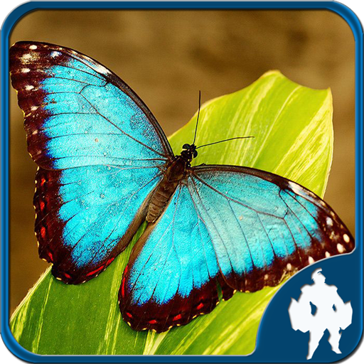 Butterfly Jigsaw Puzzles 1.9.0 APK PROCrack for android Download android app