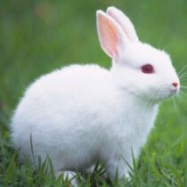 Talking Rabbit 1.1.5 APK Mod for android Download android app